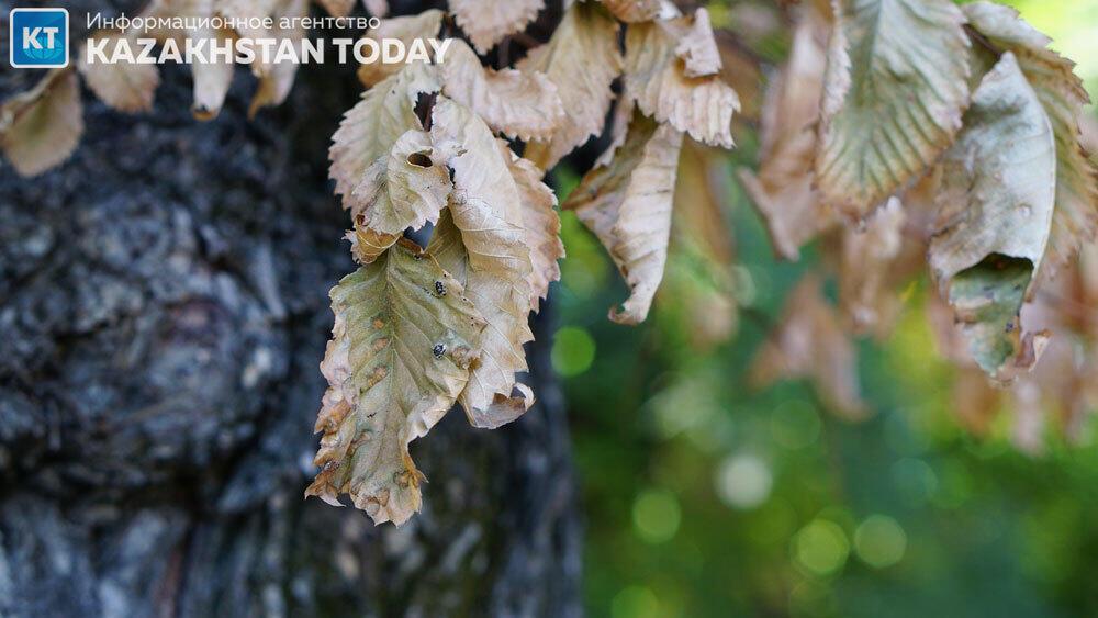Ранняя Алмаатинская осень. Фото: Эрик Куватов
