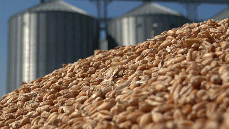 Kazakhstan may export about 6-6.5 million tons of grain - Ministry of Agriculture