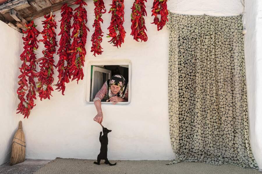 Картина мира: самые впечатляющие фото года. Фото: «Кошачья любовь» Хасана Учара — о пожилой одинокой жительнице Стамбула, которая счастлива со своими питомцами.| iz.ru