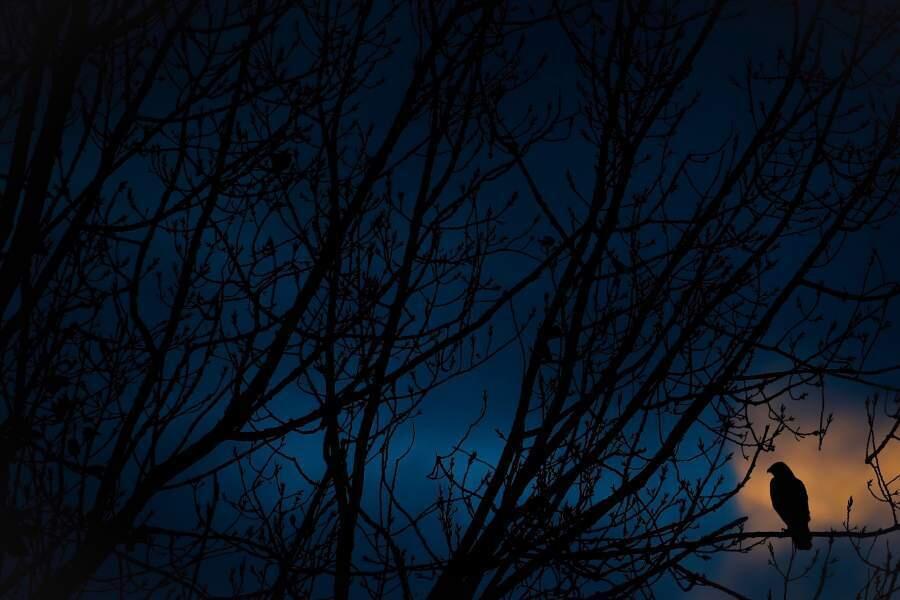 Картина мира: самые впечатляющие фото года. Фото: «Канюк в сумерках» Бена Пуллеца.| iz.ru